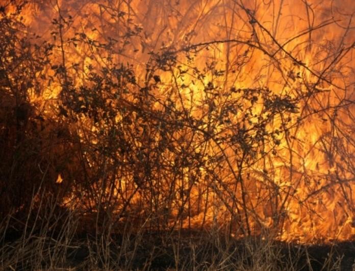 Συναγερμός από την πύρινη λαίλαπα στη χώρα! Εκκενώθηκε χωριό στη Λαμία!