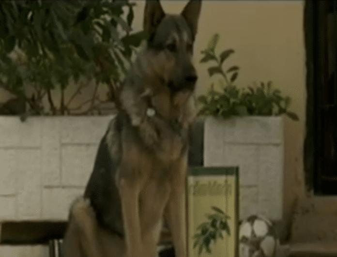 Σάλος στην Εύβοια! 11χρονο αγόρι δέχτηκε άγρια επίθεση από σκύλο! (Βίντεο)