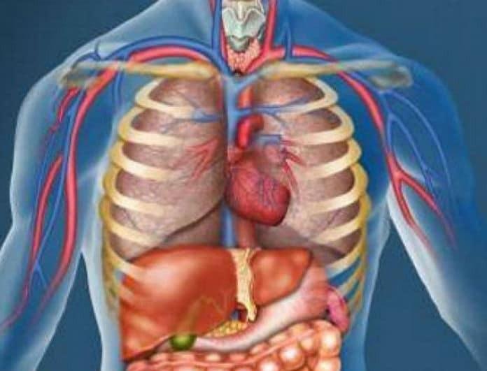 Αδιανόητο! Επιστήμονες ανακάλυψαν νέο όργανο στο ανθρώπινο σώμα! Ποια είναι η λειτουργία του;