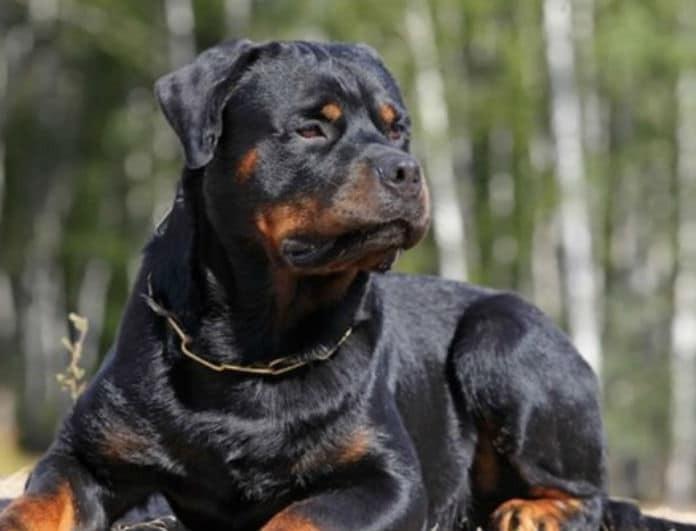 Ραγδαίες εξελίξεις με τον σκύλο που δάγκωσε 2χρονο στην Πέλλα! Τι ισχυρίζεται η μητέρα του;
