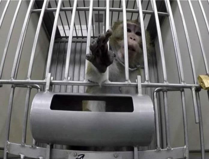 Βίντεο σοκ: Σάλος στο διαδίκτυο με την κακοποίηση πειραματόζωων! Τα έπιαναν από το λαιμό και τους πέρναγαν χειροπέδες...