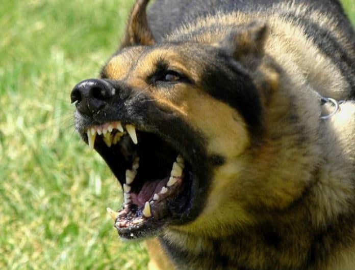 Σοκ στη Λαμία: Σκύλοι επιτέθηκαν σε γυναίκα!