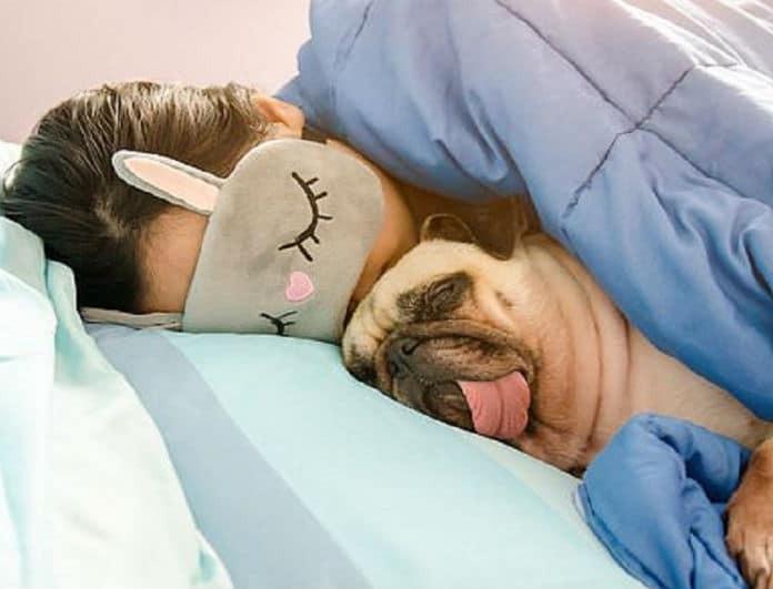 Κοιμάστε στο κρεβάτι με το σκύλο; Τι κινδύνους έχει για την υγεία σας;