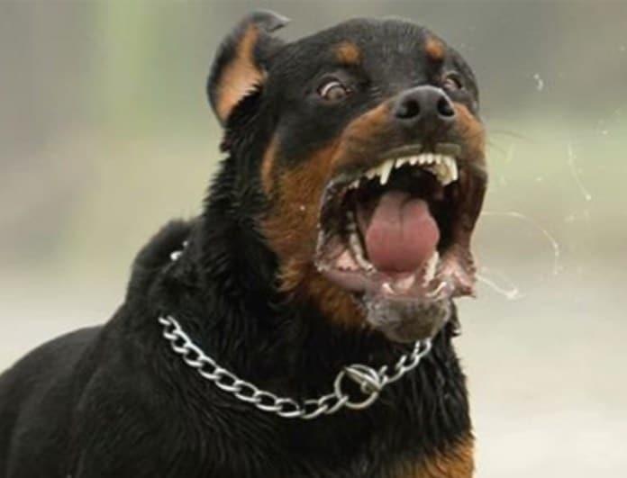 Ασύλληπτη τραγωδία: Σκυλιά κατασπάραξαν εγκυμονούσα!