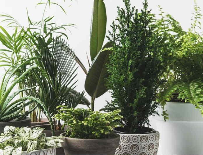 Προσοχή! Έχεις φυτά στο σπίτι σου; Μπορεί να είναι επικίνδυνα για την υγεία σου και το περιβάλλον!