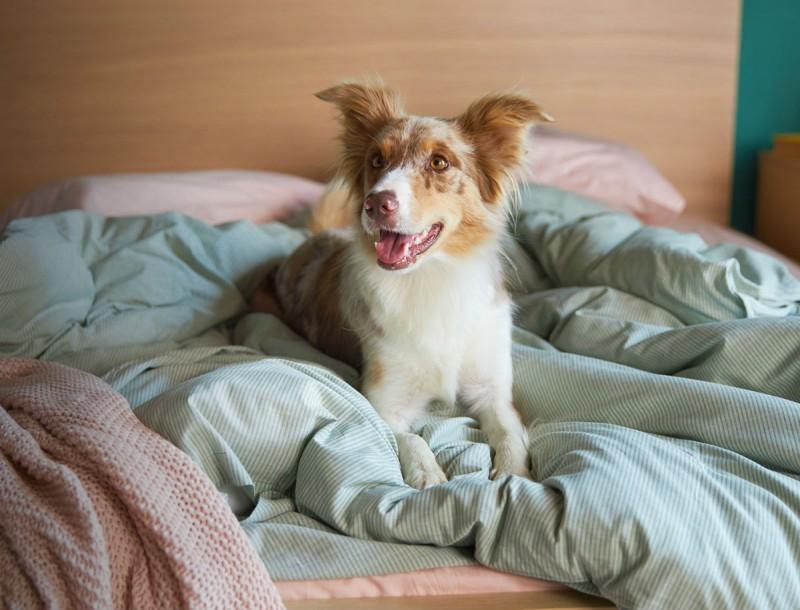 Η Κάρμα, το σκυλάκι από τη διαφήμιση της ΙΚΕΑ, θέλει τη βοήθειά σας!