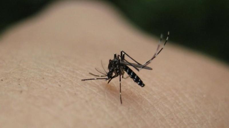 τρόποι για να μη σε τσιμπήσουν τα κουνούπια