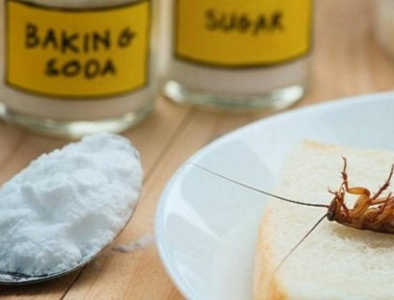 Εξαφάνισε τις κατσαρίδες με σπιτικό εντομοκτόνο από μαγειρική σόδα