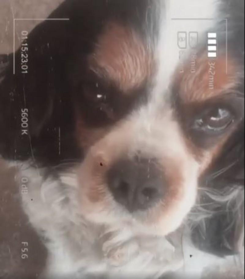 Γυναίκα χωρίς όνομα Ντόρα Μακρυγιάννη σκύλος πέθανε