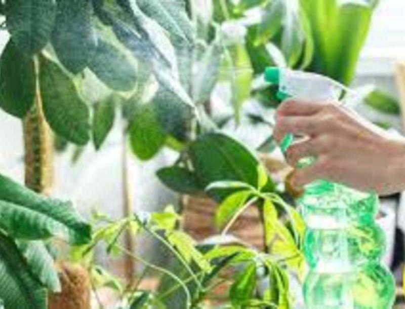 Ρίξτε μαγειρική σόδα στα φυτά σας και εξαφανίστε ασθένειες και έντομα