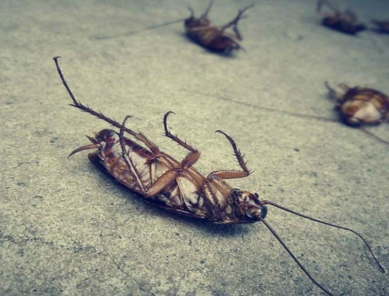Στείλτε στον... αγύριστο τις κατσαρίδες με αγγούρι! Το κόλπο που θα σώσει το σπίτι σας από τις φωλιές τους