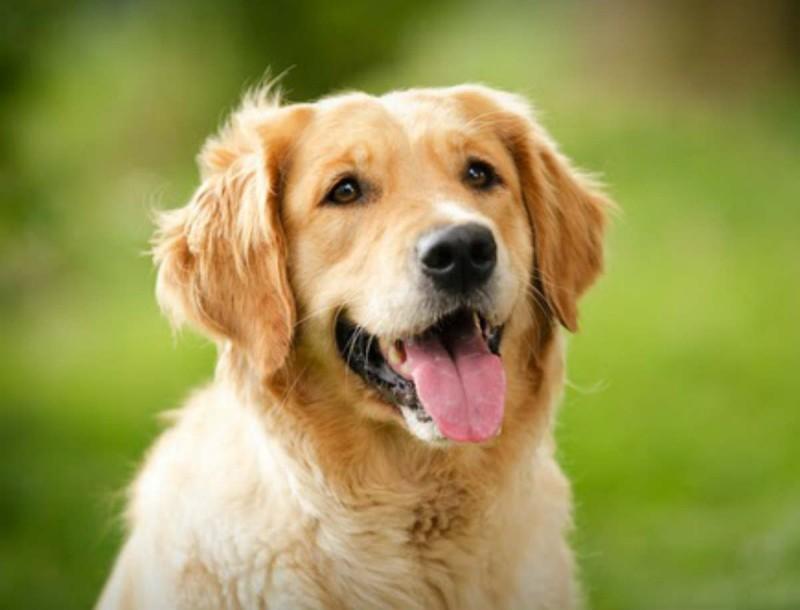 Έρευνες δείχνουν πως οι σκύλοι οσμίζονται τον κορωνοϊό -