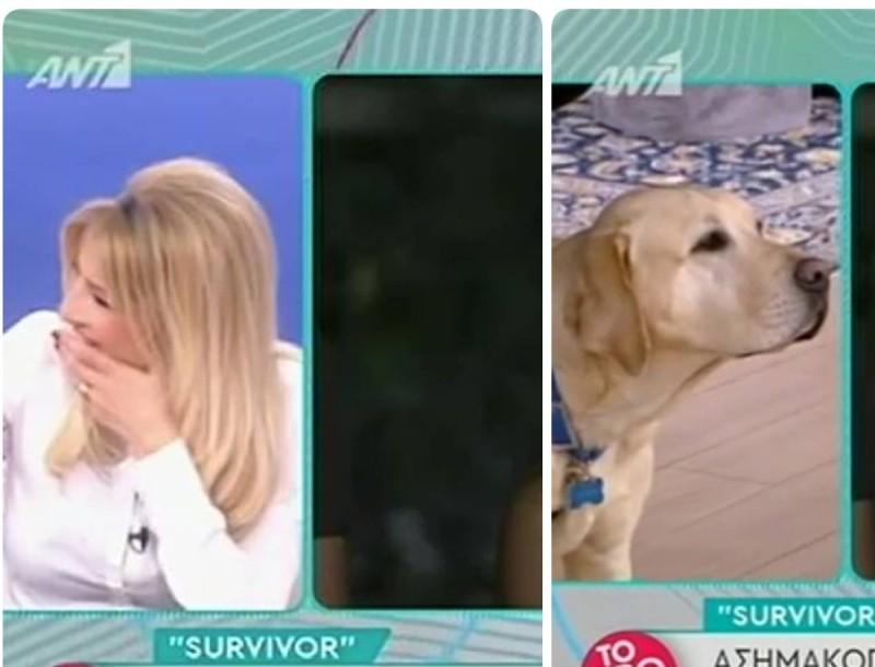 Πρωινό: Ο σκύλος του Ουγγαρέζου γάβγιζε ασταμάτητα στον Λιάγκα