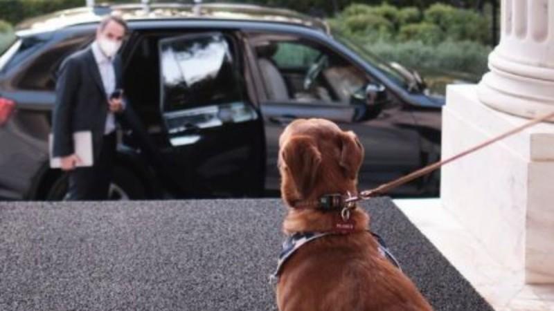 O Κυριάκος Μητσοτάκης υιοθέτησε αδέσποτο σκυλάκι