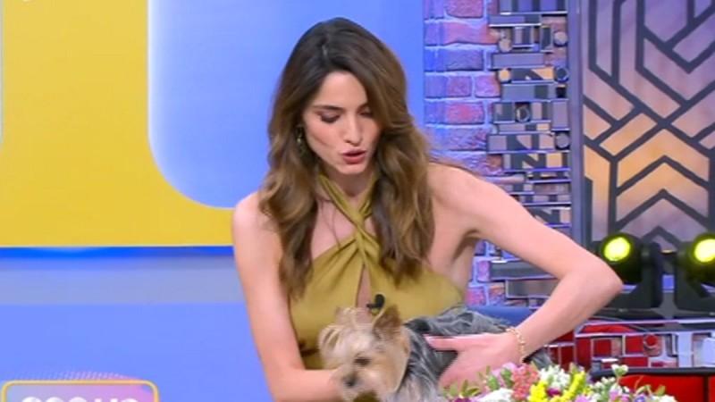 Pop Up: Το σκυλάκι που επισκέφθηκε την Ηλιάνα και το επικό σχόλιο στον αέρα
