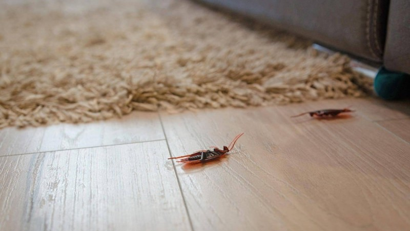 7+1 φυσικοί τρόποι για να εξαφανίσεις τις κατσαρίδες από το σπίτι