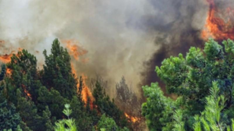 Φωτιά στη Βαρυμπόμπη: Ανεξέλεγκτη πια η πυρκαγιά - Εκκενώνεται όλη περιοχή